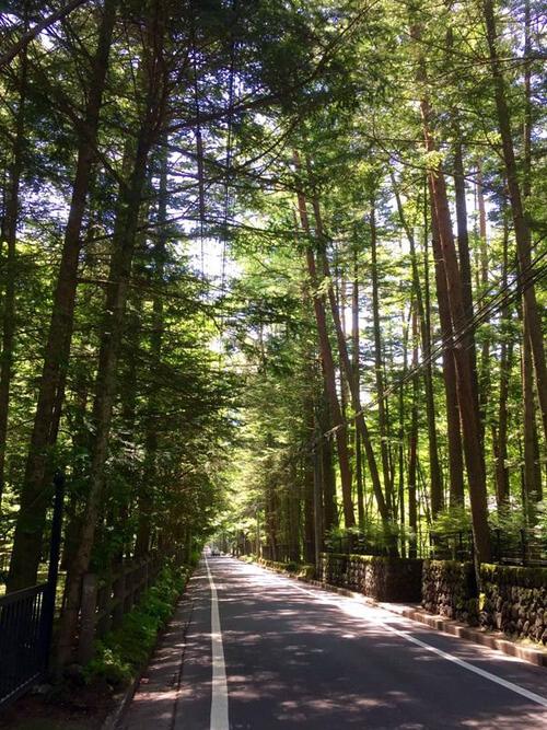 三笠通りの落葉松並木