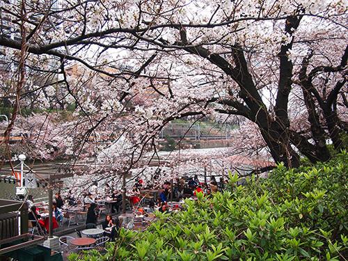 外濠沿いの桜並木