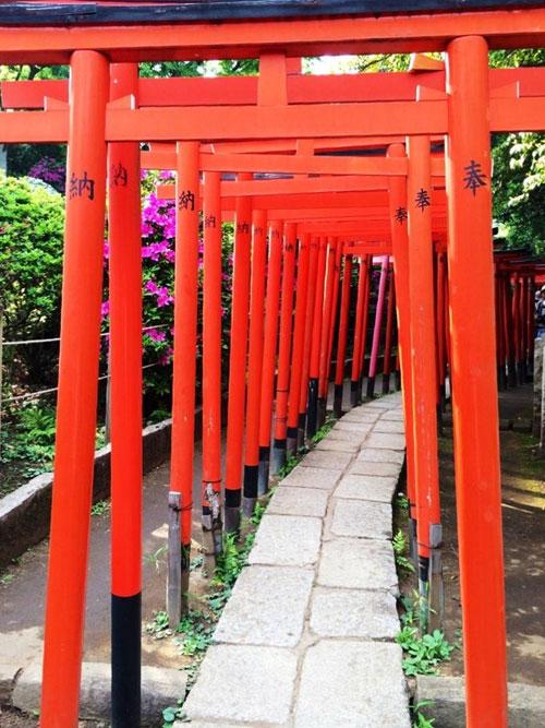 乙女稲荷神社の千本鳥居