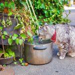 猫の街 神楽坂