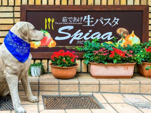 パスタの店 SPIGA 飯田橋店