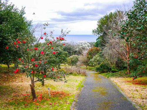 都立大島公園