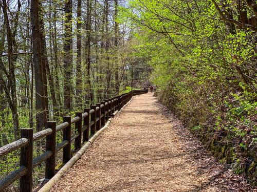 檜原都民の森